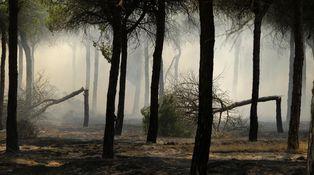 Doñana, peligrosas contradicciones