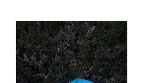Macabro hallazgo en Allariz: aparecen tres sacos con restos de animales descuartizados
