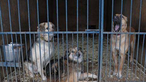 El alcalde de Seúl promete acabar con los mataderos de perros de la ciudad