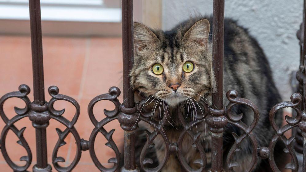 Foto: Un gato se asoma al balcón de una vivienda de Jaén. (EFE)