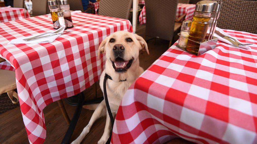 Foto: Un perro en un restaurante. (iStock)
