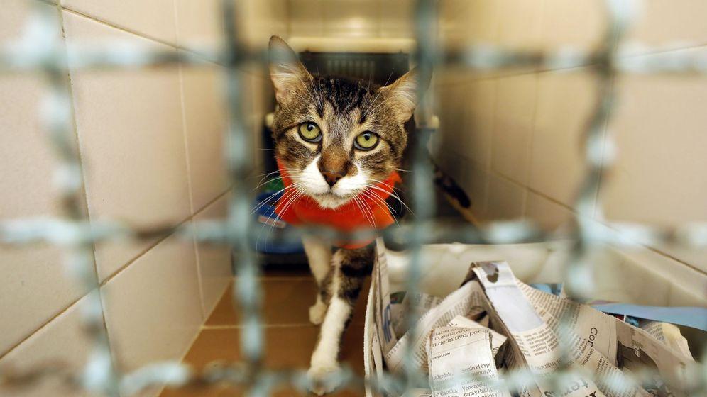 Foto: Un gato acogido. (EFE)