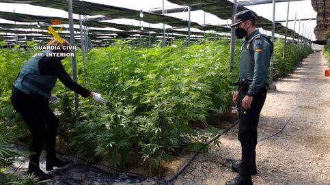 La Guardia Civil se alía con las eléctricas para desarticular con 'big data' plantaciones de cannabis