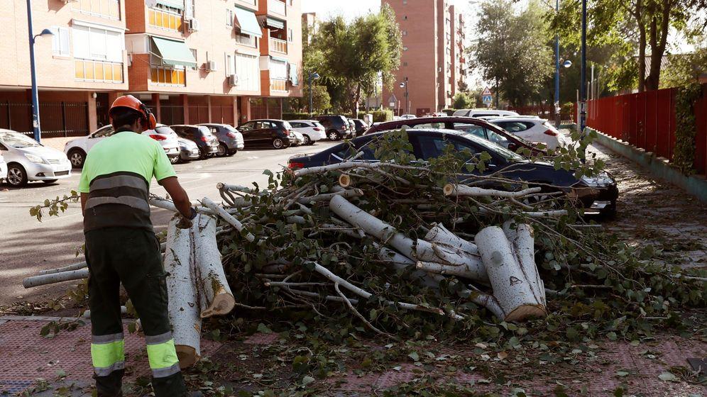 Foto: Árbol caido por la tormenta de ayer en Leganés (EFE)