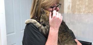 Post de Un gato se reúne con su dueña 11 años después de desaparecer de su casa