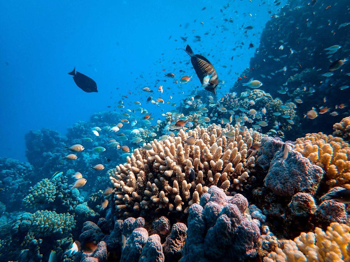 Foto: La Gran Barrera de Coral. (Unsplash)