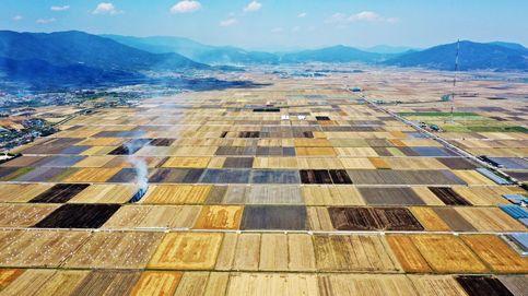 Campos de cebada en Corea del Sur y colección de Verano 2020 de Lottusse: el día en fotos