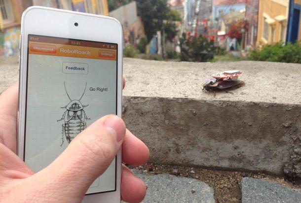 Foto: El surrealista negocio de convertir cucarachas en cíborgs