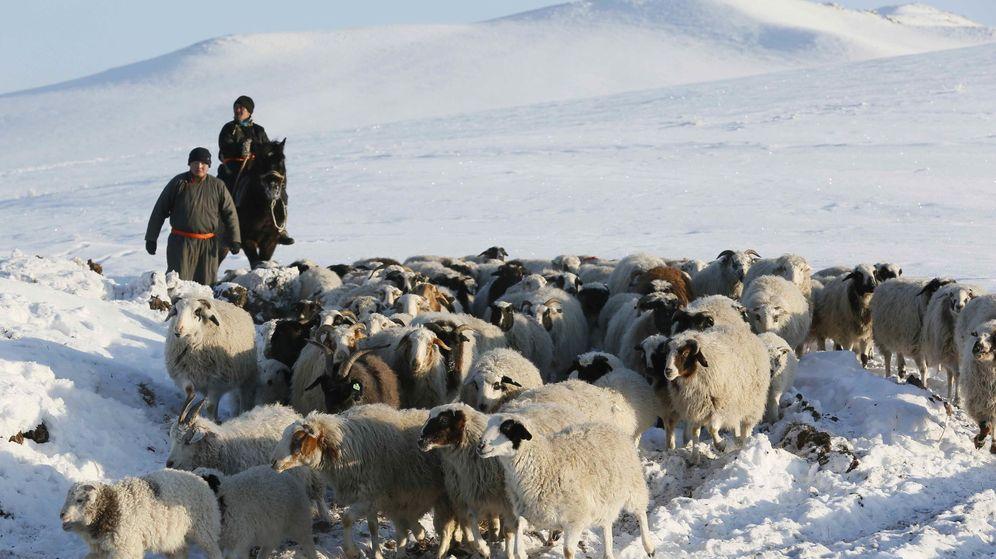 Foto: Rebaño de ovejas en Tuva, Siberia. (Reuters)