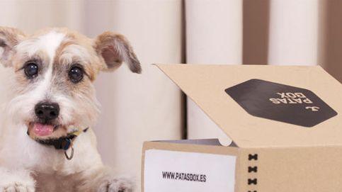 ¿Quieres vestir a tu perro? Todas las opciones para llevarlo a la última