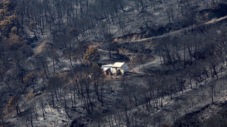 Vista general de la zona quemada por el fuego del incendio de Sierra Bermeja. (EFE)