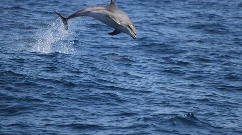 Muere una cría lactante de delfín en Mojácar acosada por los bañistas