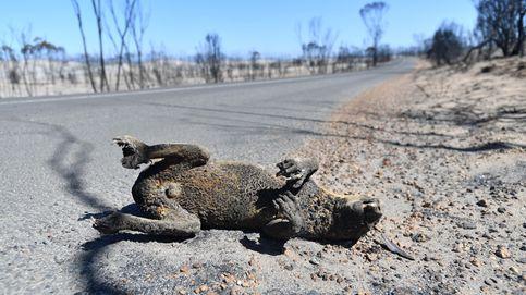 1.000 millones de animales han muerto ya en los incendios que arrasan Australia