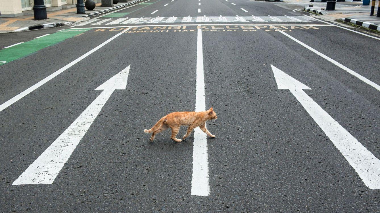 Foto: Un gato cruza una calle vacía. (EFE)
