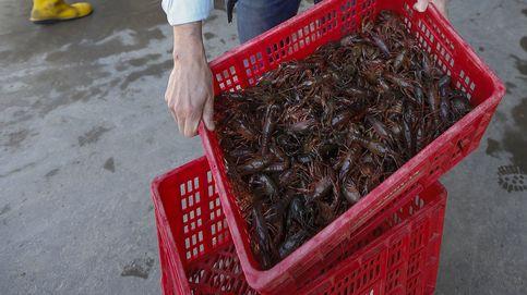La prohibición del cangrejo destroza una comarca y afecta a Mercadona