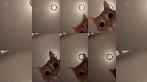 El gato de Tik Tok que arrasa en todo el mundo con un vídeo de solo 12 segundos