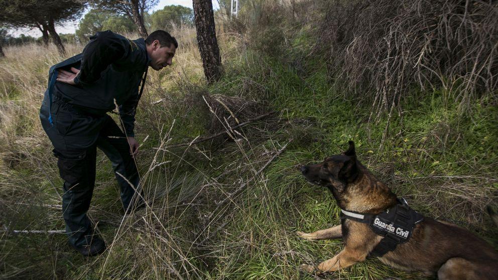 Cuatro perros mueren envenenados en Galicia tras beber en una charca