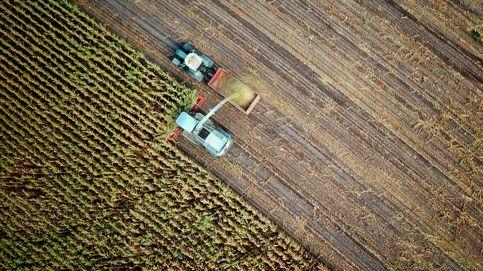 ¿No tenemos un problema? Las pérdidas de cultivos se han triplicado en 50 años
