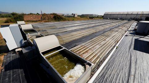 Bioenergía con microalgas