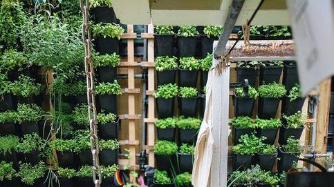 Estos son los proyectos pioneros en agricultura vertical
