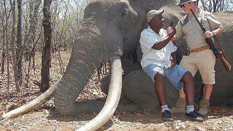 Un alemán acaba con la vida de uno de los elefantes más grandes de África