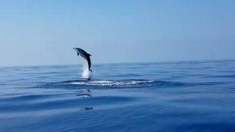 Así da las gracias un delfín cuando logran liberar a su cría de una red de pesca