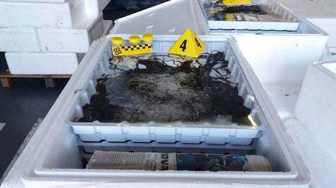 Detenidas dos personas e intervenidos 80 kilos de angulas en la frontera con Francia