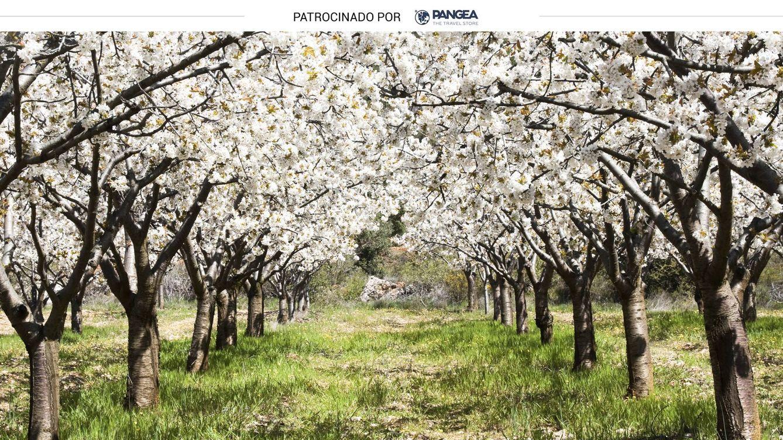 Valle del Jerte: excursiones para conocer los cerezos en flor