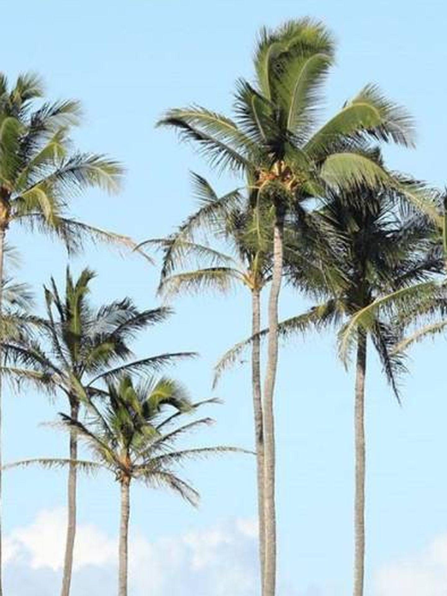 Hawái, playas paradisiacas, palmeras y Ho'Oponopono.