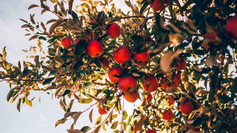 La reinvención de la sidra: siete manzanas para inventar una nueva bebida