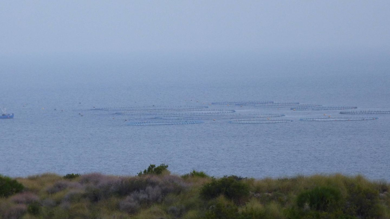 Granja de atún rojo en Portmán (Murcia) del Grupo Fuentes. (M. García, ICIJ)
