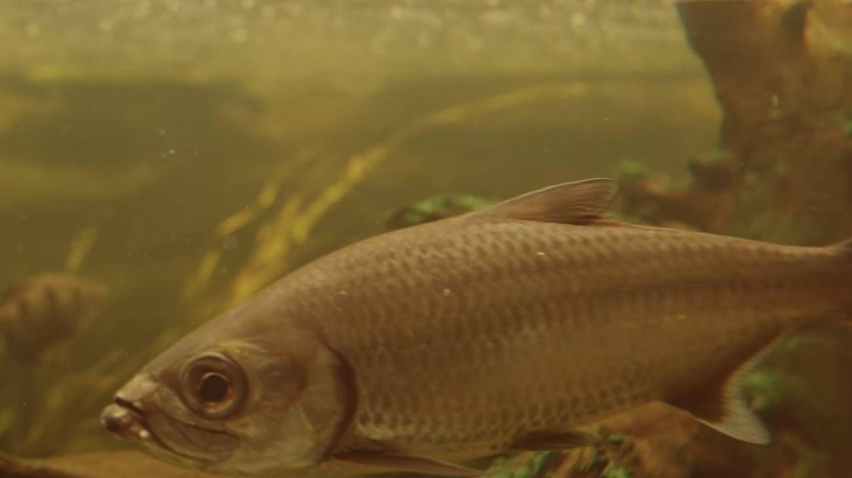 La Tierra enviará peces a Marte para invernaderos.