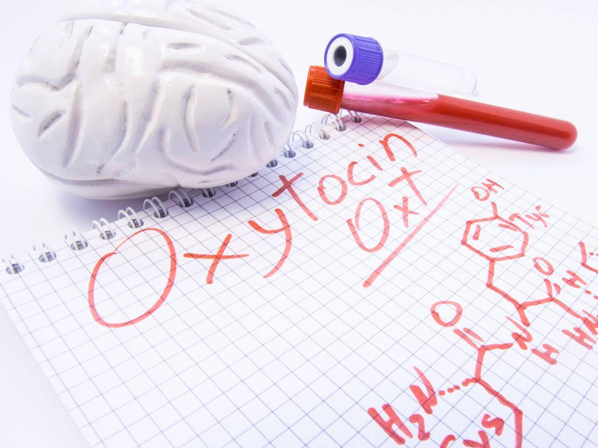 Foto: Oxitocina, la hormona del amor. (iStock)