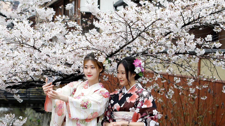 El Objetivo De Los Selfies De Los Japoneses: Los Cerezos