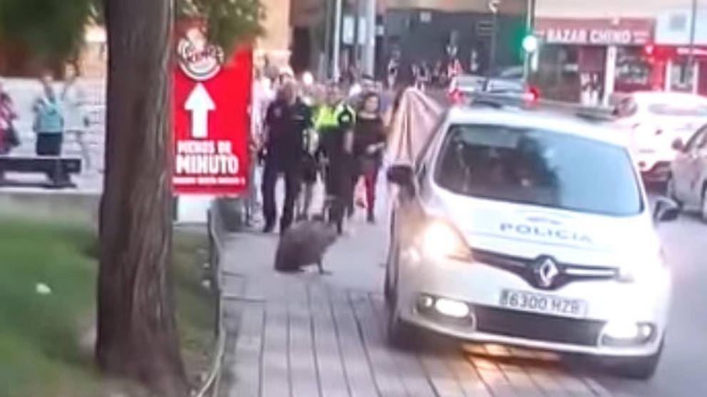 La policía rescata a un buitre desorientado en pleno centro de Jaén