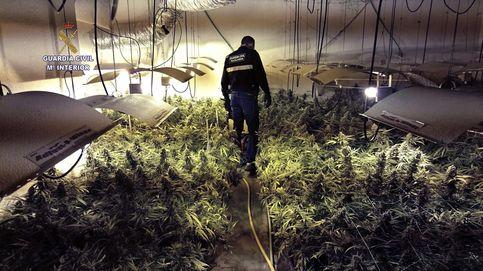 Detenidos con casi 1.800 plantas de marihuana en un chalet  en Madrid