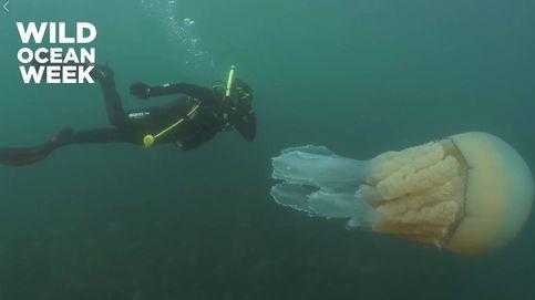 Se bañan junto a una medusa gigante que era del tamaño de una persona