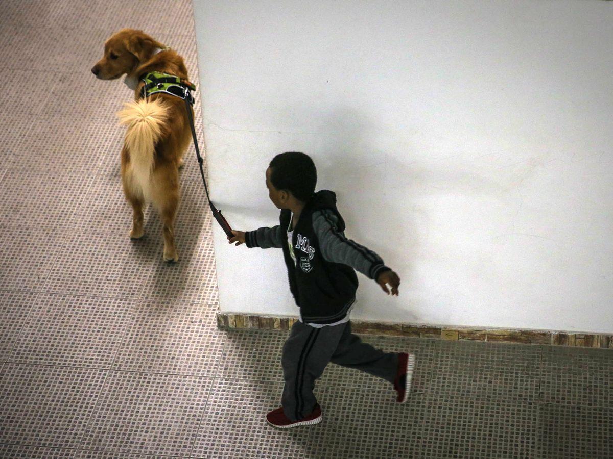 Foto: Un niño paseando un perro en Brasil. Foto: EFE FERNANDO BIZERRA JR