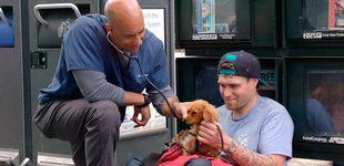 Post de El veterinario callejero, el cuidador gratuito de las mascotas de los sin hogar