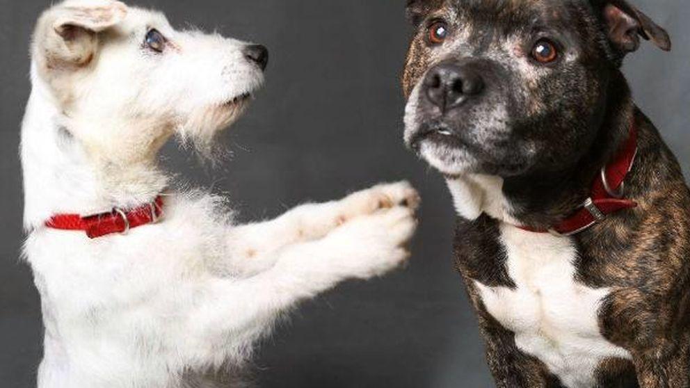La enternecedora historia de un perro ciego y su inseparable compañero