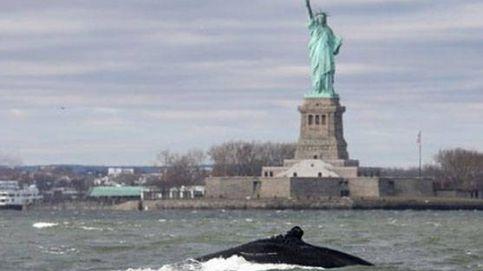 Una ballena jorobada 'visita' la Estatua de la Libertad