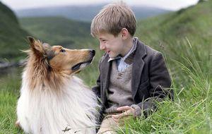 Lassie, un perro para salvar las cuentas de Dreamworks