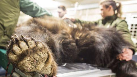 Subasta en Sotheby's y reconocimientos médicos en el zoo: el día en fotos