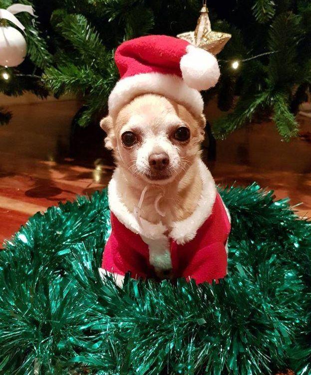 Instagram: Mowgly, el perro de Paula Echevarría, la estrella de sus Navidades