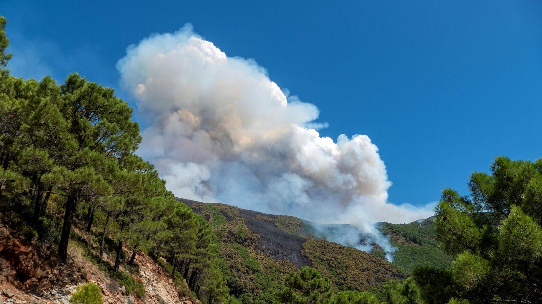 El incendio forestal de Sierra Bermeja. (EFE)