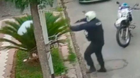 El movimiento más absurdo: un ladrón se esconde de la policía en una minipalmera