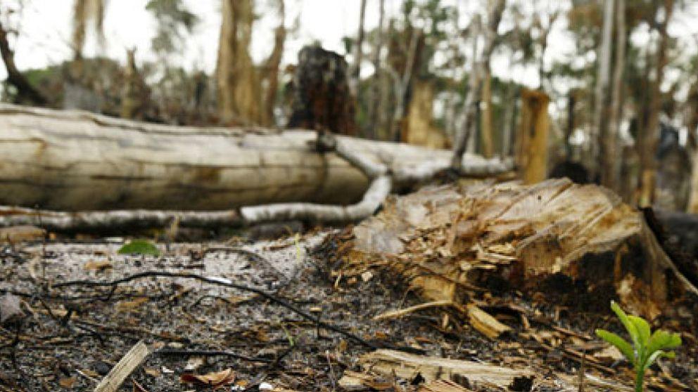 La economía de Brasil crece a costa de la deforestación del Amazonas