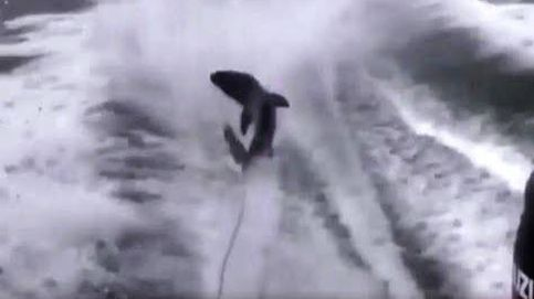 Tres detenidos por torturar a un tiburón en Florida