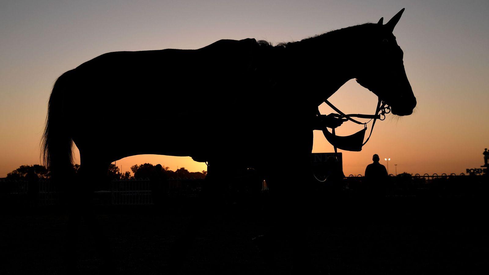 Foto: La firma de capital riesgo ha elegido como imagen corporativa la silueta de un caballo.