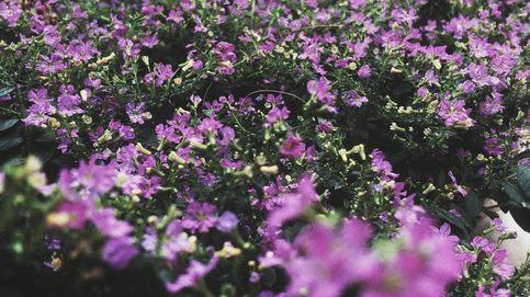 El 'grito' de las plantas que están en peligro para avisar a otras de la amenaza